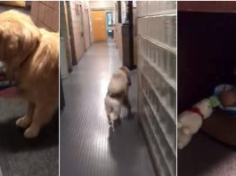Franklin Police Department's dog stole toys from donation room -