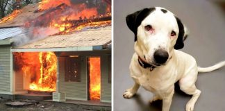 Dog Lost Family In Fire, Spread His Sad Story And Help Him Find A Home Before Christmas
