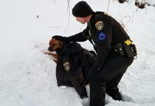 Cop Comforts Dog Hit By Car, Drapes His Jacket Over Her While They Wait For Help -