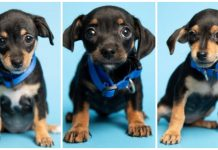 Duffel Bag Full of Puppies Found in Hot Dumpster, Police Asks Public for Help -