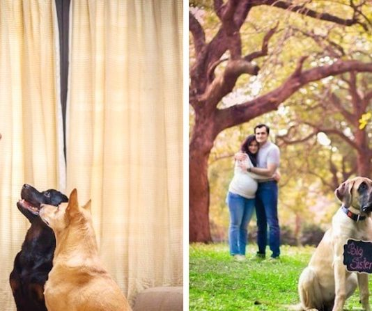 Pregnant Woman Who Was Told To Get Rid Of Her Dogs Decides To Do Touching Photo Shoot Instead