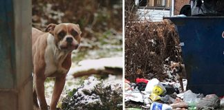 Pit Bull Abandoned By Owners At A Dumpster Among The Frozen Trash