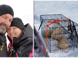 Couple snowmobiling comes across 3 shivering pups on mountain