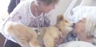 Dying woman holds 19-year-old therapy dog close. In this moment, the dog knows exactly what to do -