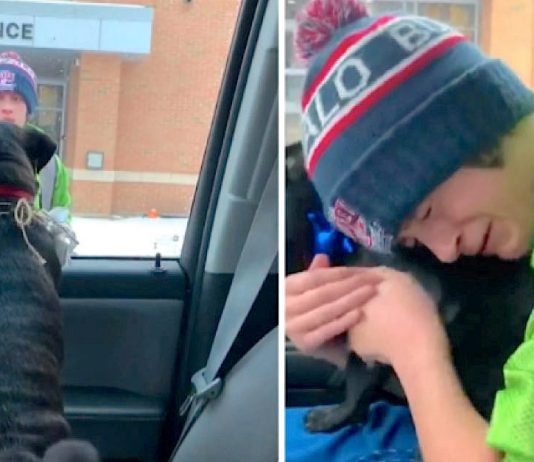 14-Year-Old Boy Cries When Missing Dog Finally Returns Home -