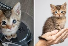 Family Took in Pint-sized Kitten After He Was Found All Alone on the Street