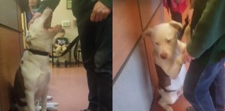 Dog Clings to Owner at the Shelter the Moment He Realizes He's Being Surrendered -