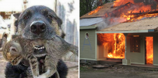 Brave Dog Risks His Own Life in House Fire to Save His Little Feline Friend -