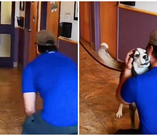 Lost for 3-Years, Dog Howls with Joy When He Sees His Human Dad Standing in Front of Him -