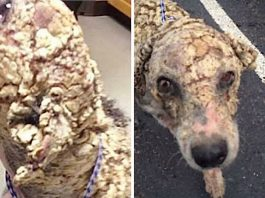 "Dumped Dog Covered in Potato Chip-Like Scales Looks ""Unrecognizable"" After He Was Rescued -"