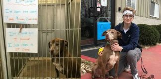 'Ginger has gone home': Dog waiting 7 years for adoption now leaves Missouri shelter