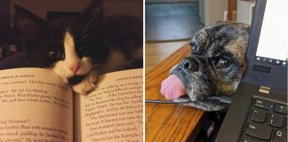 10+ Pets Who Won't Leave Their Beloved Owners Alone For Even A Second