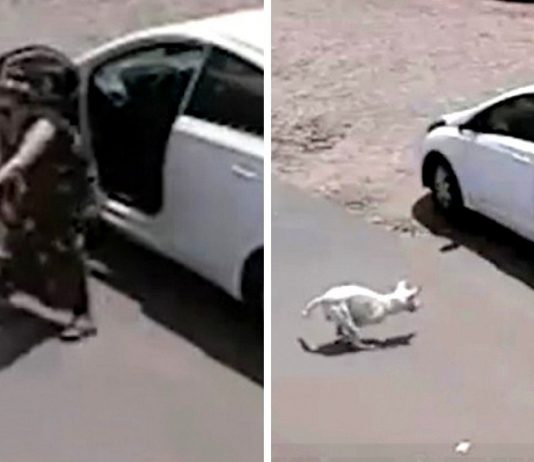 Cruel Owner Throws Disabled Dog Out of Car, Kicks Him Face-First Into the Ground -