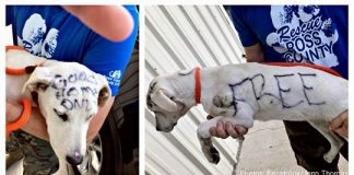 """Abandoned Puppy Found With The Word """"FREE"""" Written On Her Fur In Permanent Marker"""