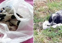Dog found by the road holding a plastic bag with her dead puppies