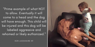 Internet users explain why it's dumb and dangerous to let children mistreat pets