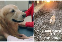 Scout, the cancer-battling dog who starred in two Super Bowl commercials, has died — rest in peace