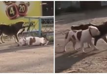 Stray dog sees tied-up dog, senses he needs help and works to set him free