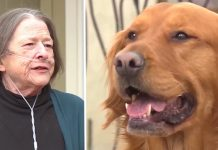 Dog delivers groceries to neighbor with COPD during coronavirus pandemic