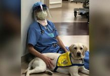 Therapy dog provides much-needed mental break for exhausted health workers