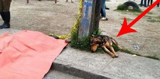 Grieving Dog Refuses To Leave His Owner's Body Who Was Killed In Hit-And-Run