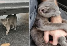 Stray Kitten Follows A Stranger In Parking Lot And Begs To Be Adopted