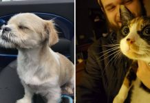 15+ Times Pets Did Something For The First Time And Had The Cutest Reactions
