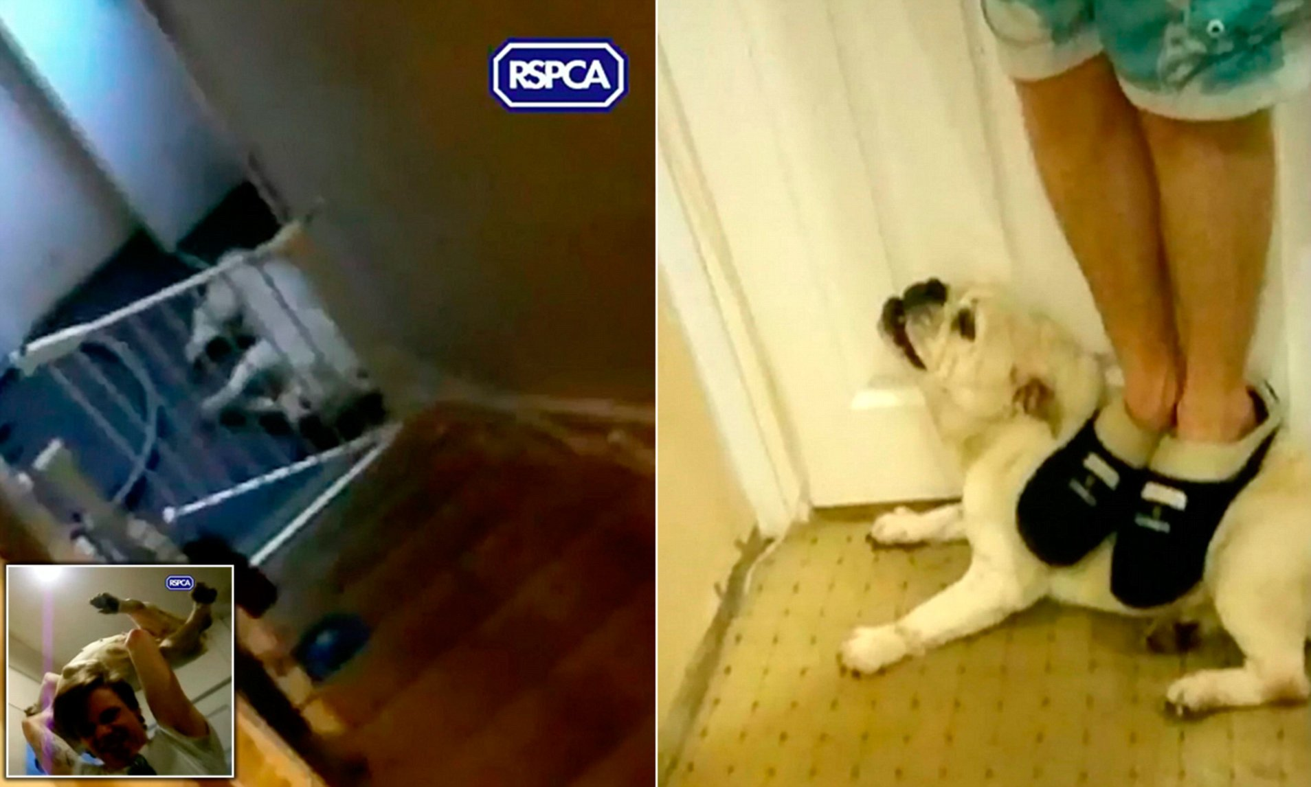 Yorkshire brother who filmed a dog being thrown downstairs ...