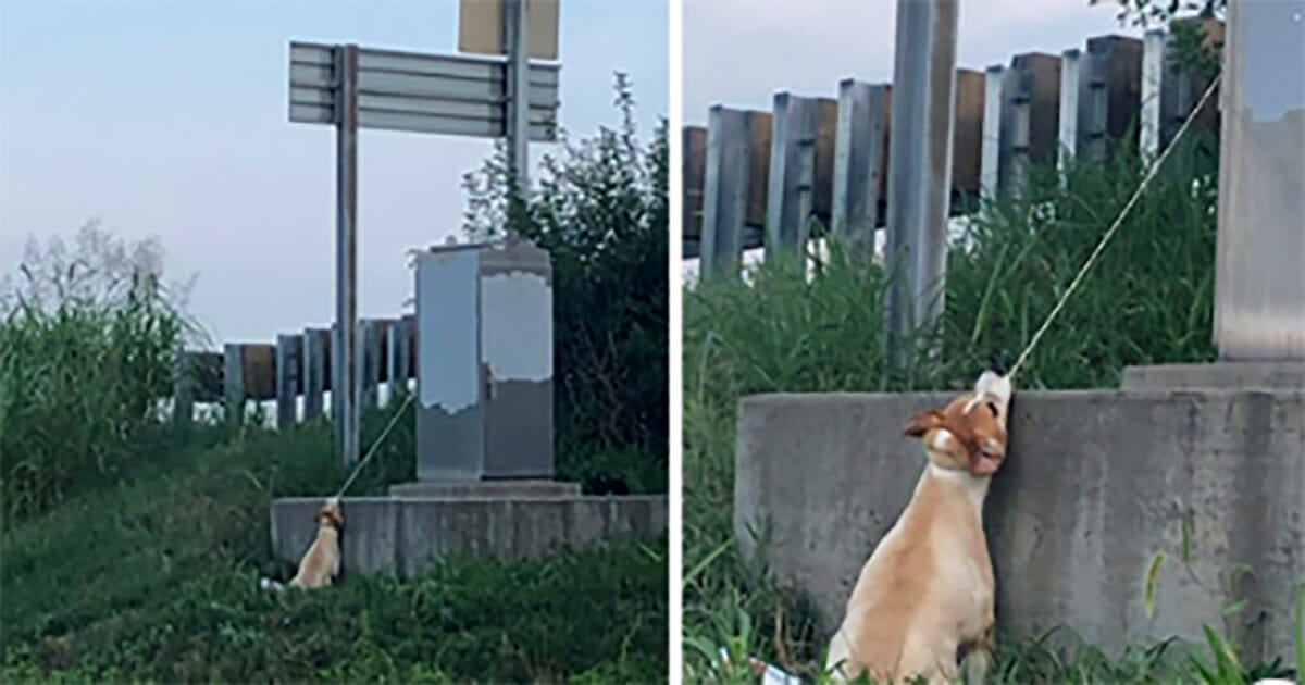 """Man Stops His Car after Spotting Dog """"Hanging"""" from a Power Box Struggling to Breathe"""