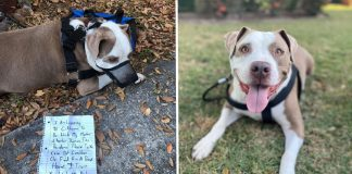 Owner flees state because of coronavirus and leaves behind his 'super sweet' dog