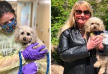 New Jersey dog who lost owners to coronavirus finds forever home