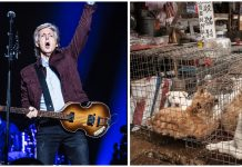 Paul McCartney calls on China to shut down wet markets after coronavirus pandemic
