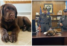 Newest K-9 recruit puppy snoozes through his whole swearing-in ceremony