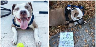 Owner abandons pit bull by tying them to a tree as they flee from the coronavirus