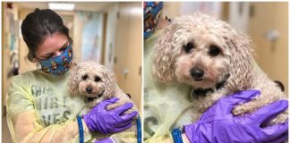 Poor dog lost both her owners to COVID-19 —now she's looking for a new home