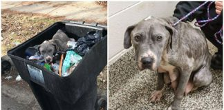 Poor dog was thrown away in the trash and separated from her puppies — now a rescue is hoping to reunite them