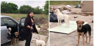 Good samaritan confronts and films woman as she abandons four dogs