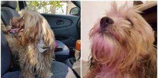 Man rescues mangy dog from traffic — then finds a note revealing she was abandoned