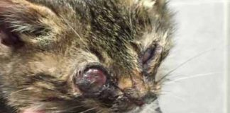 Guy Finds A Dying Kitten On The Streets And Does Everything He Can To Save Her Life