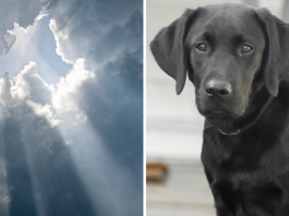 """God"" Responds to Little Girl's Letter after Her Dog Passes Away -"