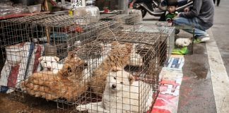 Chinese city passes ban on eating cats and dogs in wake of coronavirus outbreak