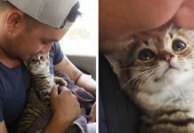 10+ Pets Who Love Their Owners More Than Anything