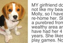 Man's Girlfriend Gives Him Ultimatum, Either the Dog Goes or She Goes -