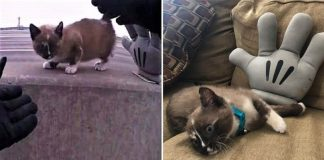 Police Officer Saves Kitten From Highway Barrier And Gives Her A Forever Home – Paws Planet – World Animal News