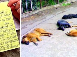 """Thug Sends Threat Mails & Poisons Dogs Who """"Bark"""", $5000 Reward As 11 Dogs Die"""