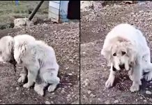 Owners Convince Senior Dog She's Worthless as They Keep Her Chained and Then Leave Her Behind