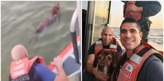 Old dog is found frantically swimming in the ocean, so the Coast Guard comes to the rescue