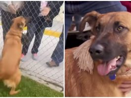 Abandoned shelter dog thinks her owners have returned for her — but they were there for another dog