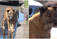 Blind, stray dog fended for himself for 10 years before his rescuers came along