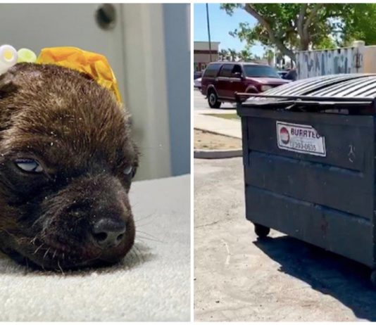 Severely burned puppy was found abandoned in dumpster—rescuers race to save her life